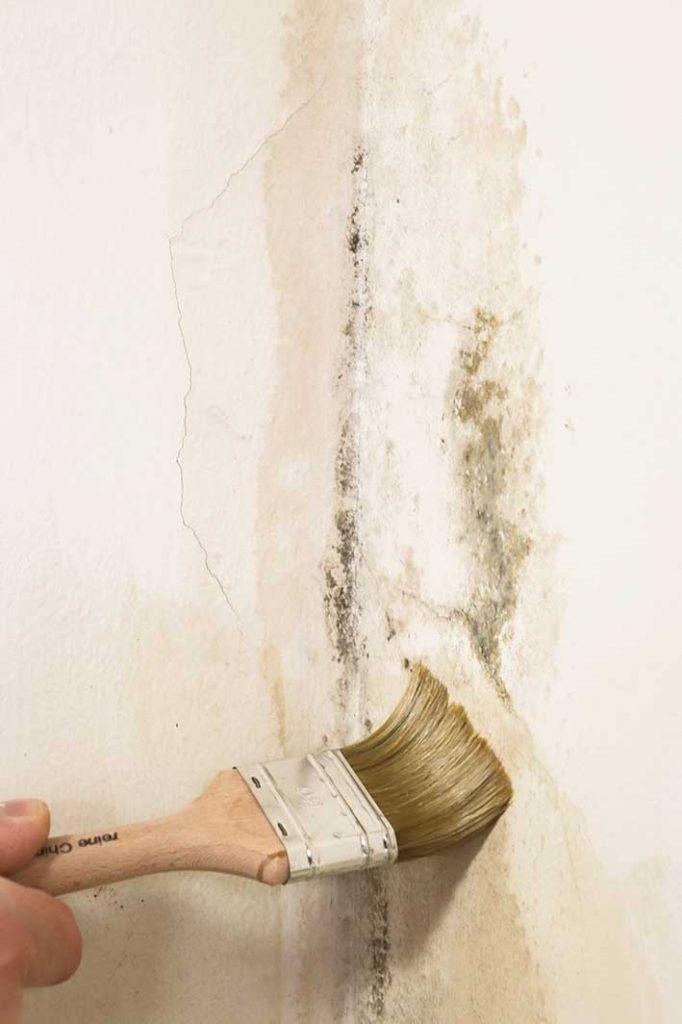 kreidezeit-naturfarben-schimmelbehandlung-schimmelknacker