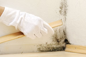 Mould Treatment